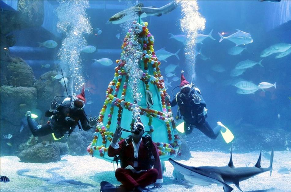 Images of the Day : Chiristmas celebrations at the Aquarium, in Jakarta, Indonesia