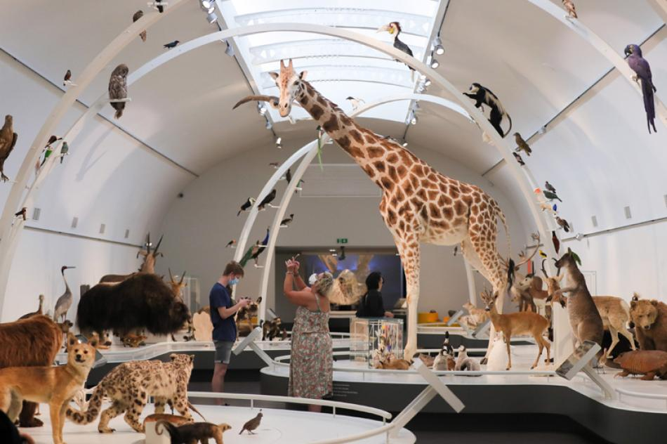 Images of the Day:People take photos of the exhibits at the Museum of Royal Belgian Institute of Natural Sciences in Brussels