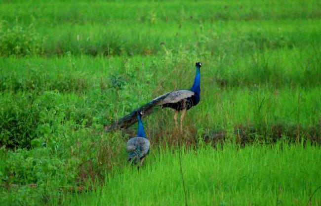 Lanka lore: Highway tales