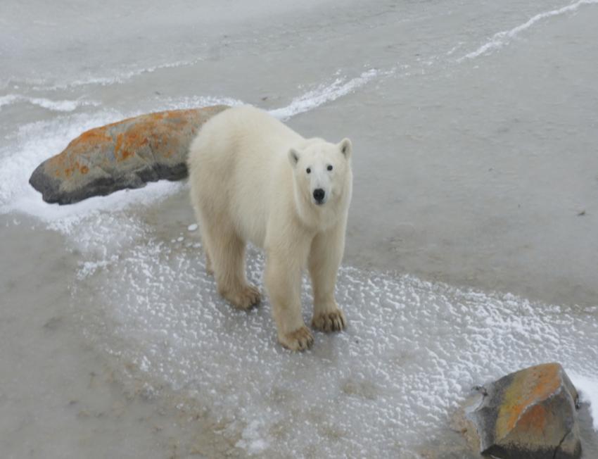 Polar Bears International honours conservation heroes with Ice Bear Award