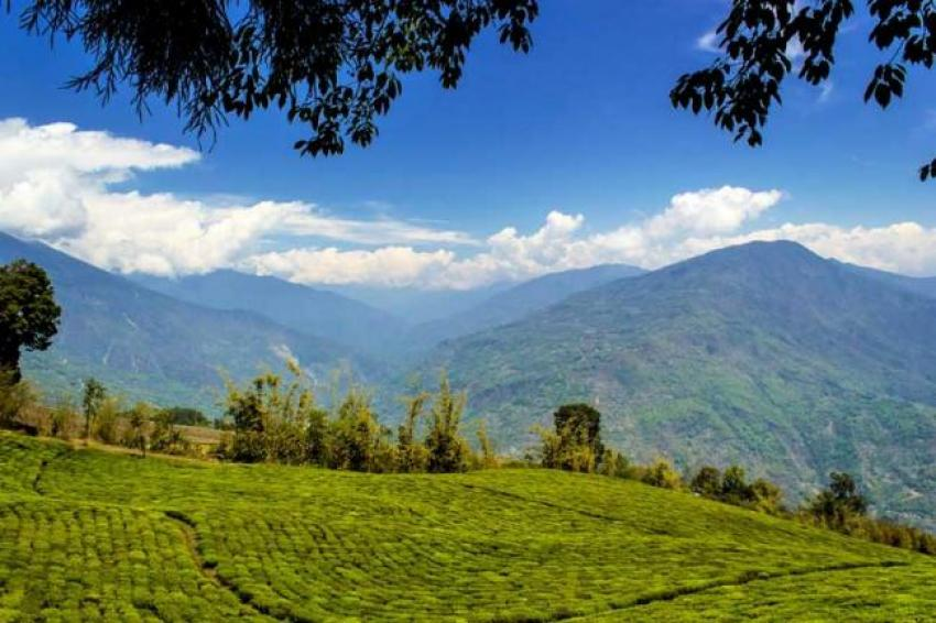 Priya Entertainments and Sikkim government collaborate to develop tea-tourism in Temi
