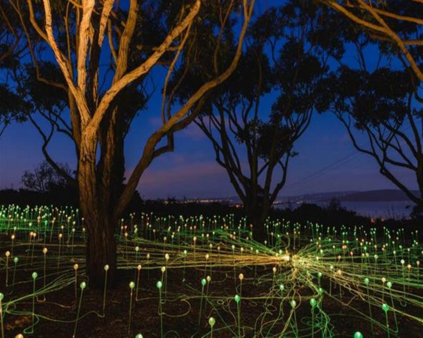 UK artist Bruce Munro's art installation attracts 29,453 people in western Australia