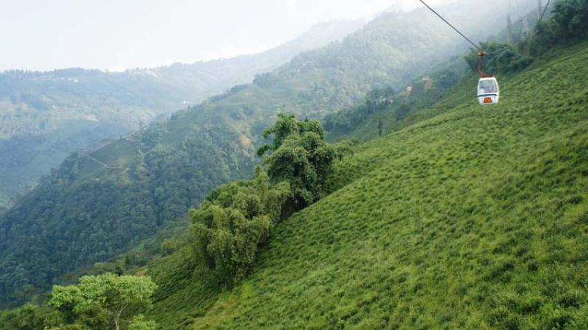 Chill out at these five tea estates in West Bengal this summer