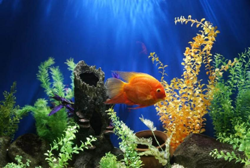 Have you seen these 8 popular aquariums of India?