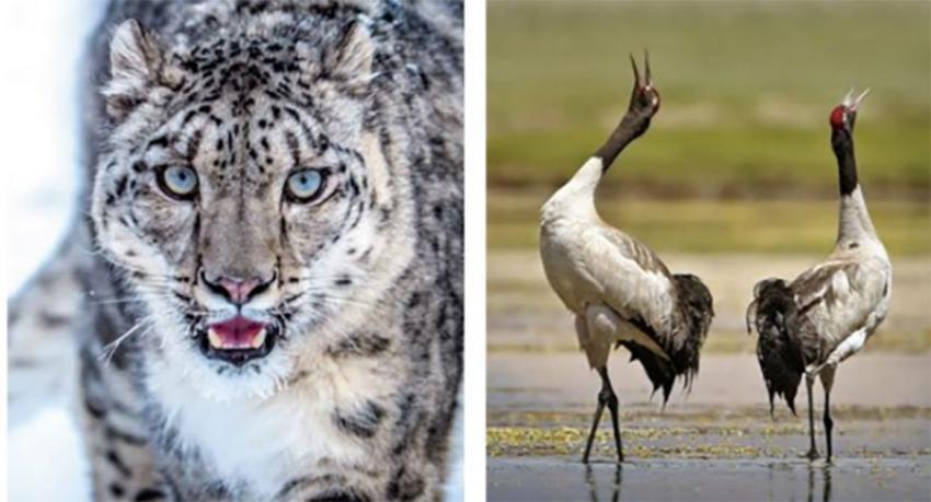 UT of Ladakh identifies its state animal and bird
