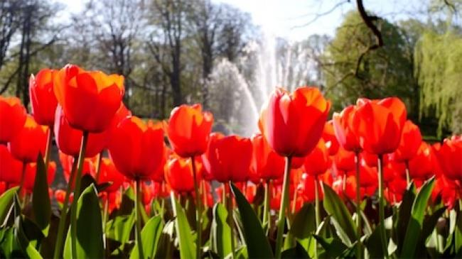 Keukenhof: Holland In Bloom